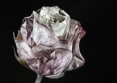 Rotten Rose, H.W.Domnik
