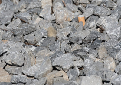 Blauflügelige Ödlandschrecke, Oedipoda caerulescens, Suchbild.