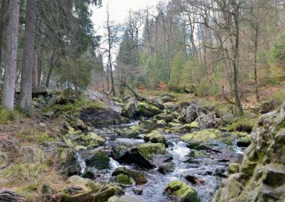 Wildbach in Belgien